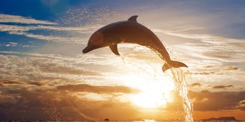 [Monday & Friday]  Dolphin Cruise